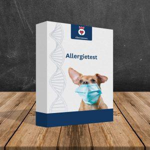 Allergietest für Hunde