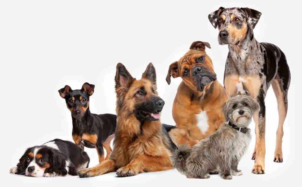 DNA Rassebestimmung Hund - Fürstenmahl