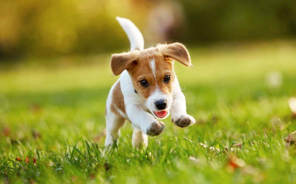 Mittel gegen Zecken für Hunde - Fürstenmahl